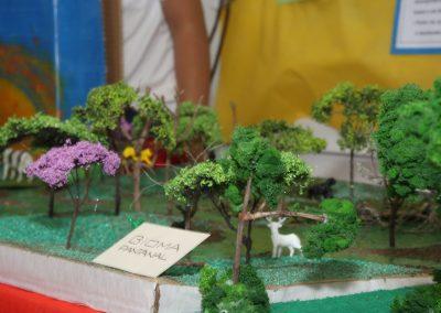 Mostra Cultural-Colegio Ipe-49